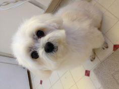 Mr. Fluffy!!!