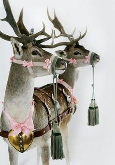 Definitely will do something with magic reindeer this Christmas...