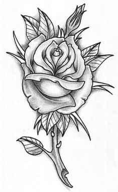 Have a good credit rose tattoo advocated by us. The very first thing I wanted. Select one of the different tattoo designs is very difficult for us. We have easily with the help of. Rose Tattoo Stencil, Rose Drawing Tattoo, Tattoo Design Drawings, Tattoo Outline, Tattoo Sketches, White Rose Tattoos, Rose Flower Tattoos, Rose Tattoos For Men, Flower Tattoo Designs