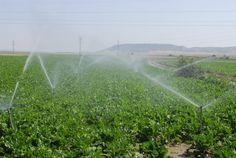 #SabíasQue… El riego por aspersión es un método que ayuda a proteger a los cultivos de las bajas temperaturas, ya que esta técnica aprovecha el calor que se desprende durante la formación de hielo. Este sistema de riego ayuda a ... Lee más dando click en la imágen