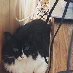 ギズモちゃん・・やっと撮れました😻💕居ない⁈と思ったらテレビの後ろに💦本当に自由きままな猫ちゃんです🐈🐾 #cats #cat #にゃ #狭いところ #落ち着くにゃー #自由にゃ#愛猫#にゃんすたぐらむ#ねこすた #にゃんこ #白黒はちわれねこ #猫好きさんと繋がりたい