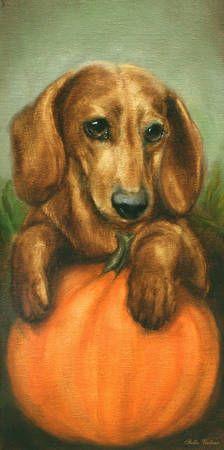 Doxie witha pumpkin...#Dachshund #Doxiedarlin'