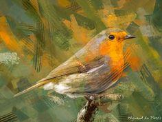 FINE ART PRINTS - European robin - Bird photos to BIRD ART Abstract Photos, Abstract Canvas, Wall Art Prints, Fine Art Prints, European Robin, Photo To Art, Art Prints Online, Robin Bird, Bird Artwork