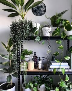 House plants House Garden bohemian lifestyle boho gypsy room inspo wanderlust good vibes You are in the right place about Lifestyle shop Here we offer you the most beautiful pictures about the Lifesty Gypsy Room, Boho Room, Decoration Plante, Best Indoor Plants, Indoor House Plants, Porch Plants, Backyard Garden Design, Large Backyard, Fun Backyard