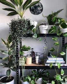 House plants House Garden bohemian lifestyle boho gypsy room inspo wanderlust good vibes