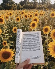 book, sunflower, and yellow image Aesthetic Photo, Aesthetic Art, Aesthetic Pictures, Aesthetic Yellow, Aesthetic Grunge, Wild Sunflower, Tout Rose, Sunflower Wallpaper, Happy Colors