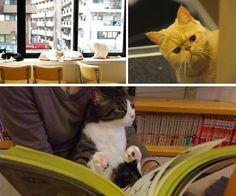 A guide to Tokyo's best cat cafés