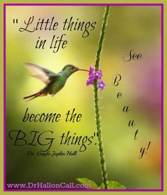 ''Little things in life become the BIG things. See beauty'' ~ Dr. Gods Love Quotes, Meant To Be Quotes, Faith Quotes, Quotes To Live By, Life Quotes, Funny Quotes, Hummingbird Quotes, Hummingbird Symbolism, Hummingbird Garden