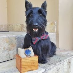 Many of you asked if I did anything special for the human for Valentines Daylolz of course I did! I know where my bread is buttered. I got her this pawsome watch from JORD @woodwatches_com! Arent I a good boy? Now I want to do something special for YOU! Ive teamed up with JORD @woodwatches_com to give you all $25 towards your very own watch. Plus one lucky pawson will win $100 towards the purchase of a pawsome timepiece!! Head over to the blog (www.HamiInMiami.com) to get all the 41...