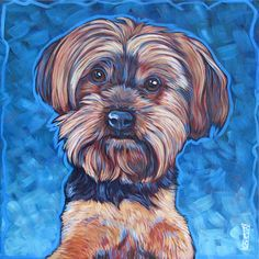 Bella the Teacup Yorkie by Bethany.
