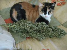 We got buds bigger than your cat