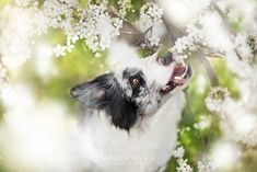 Alicja Zmyslowska. fotografia de perros 15