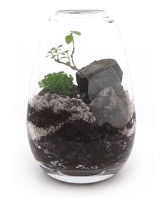 James Modern designs one-of-a-kind miniature landscapes. His process begins by working with a glass blowing artist to create unique biomporphic terrariums and then proceeds to plant and substrate selection followed by several months of nurturing the delicate environment. Finally, the terrarium is de