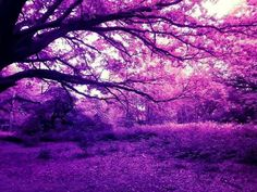 purple forest nature tree scenery trees violet wallpapers magical paisajes thanos viola fantasy google things geral arhan strategic alizza studies