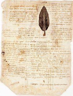 Credit: Impressions of Nature/British Library Folio 197 verso of Leonardo da Vinci's Codice Atlantico is famous for his print of a sage leaf...