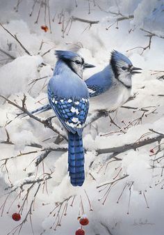 New tattoo bird watercolor blue jay ideas Cute Birds, Pretty Birds, Beautiful Birds, Animals Beautiful, Hirsch Illustration, Watercolor Feather, Tattoo Watercolor, Watercolor Painting, Painting Tattoo