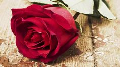 "HUNTSVILLE, Ala. (WHNT) - The ""Deal or Dud"" rose challenge is over and Fresh Market takes the unofficial Magic Rose Vase Trophy! We bought a dozen roses at four stores. One store, Costco, had two d..."