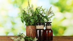 Study-proves-lemon-eucalyptus-essential-oil-is-better-mosquito-repellent-than-deet