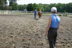 horse_lameness_exam_jogging