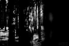 http://weecct.eu/   glitch   forest   dark   transition   light   black   white   trees  