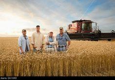 Three generations of Caucasian farmers in wheat field