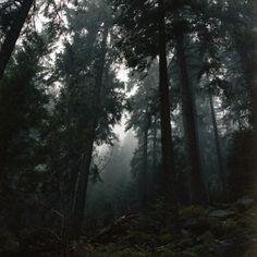 """black forests"" by Robert Kaczynski"