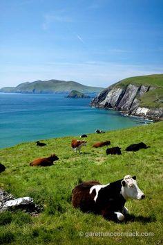 Dingle Bay, County Kerry ~ Ireland