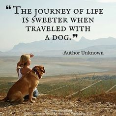 """From Chicken Soup for the Soul: My Dog's Life, """"Their Trust, Our Privilege"""": """"Th. Dog Quotes Love, Dog Quotes Funny, Funny Dogs, Dog Best Friend Quotes, Dog Sayings, Pet Quotes, I Love Dogs, Puppy Love, Cute Dogs"""