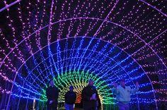虹色の電飾に包まれる「花と香りの回廊」=2012年12月6日、指宿市のフラワーパークかごしま(南日本新聞社撮影) ▼12Dec2012共同通信|虹色イルミ、冬の花木彩る 指宿フラワーパーク http://www.47news.jp/photo/47photo/2012/12/post-521.html #Ibusuki_Flower_Park #Flower_Park_Kagoshima #Ibusuki #Kagoshima
