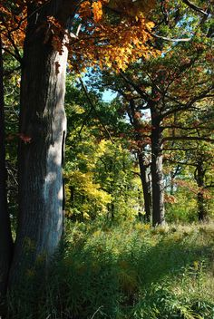 Large, deciduous forests everywhere!,