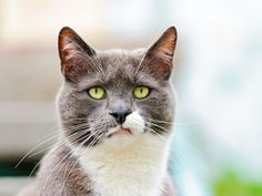 """whatever...... I too have an """"attitude"""" cat."""