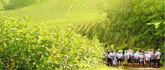 Amantes de vinho podem participar da elaboração da bebida em vinícola gaúcha · Revista ADEGA