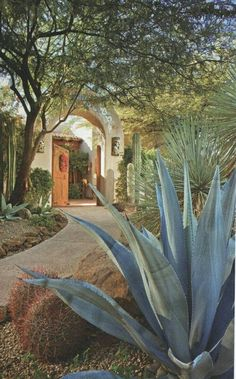 Desert landscaping is different than other styles of landscape designs because it requires the use of desert plants. Modern Landscaping, Front Yard Landscaping, Backyard Landscaping, Landscaping Ideas, Desert Landscape Backyard, Spanish Landscaping, Arizona Landscaping, Desert Gardening, Arizona Gardening