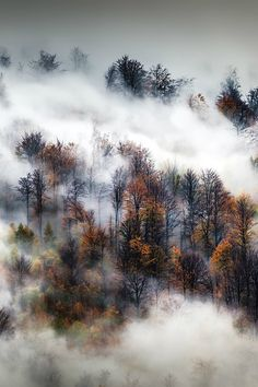 Autumn by Adnan Bubalo---And great photo too!