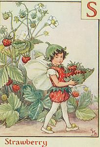 Strawberry flower fairy  by Cicely Mary Barker