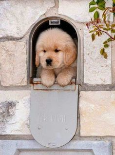 просто животные – Сообщество – Google+ Super Cute Puppies, Cute Baby Dogs, Cute Dogs And Puppies, Doggies, Maltese Puppies, Puppies Tips, Adorable Puppies, Family Friendly Dogs, Friendly Dog Breeds