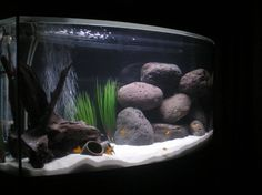 Love how this person arranged the rocks to create caves My first tank ever!