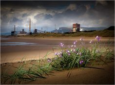 Industrial Flora | great view of Port Talbot