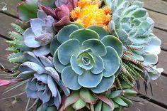Drought Tolerant Succulent Superstars | Birds & Blooms Magazine