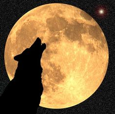 Captivatingly beautiful moon and wolf silhouette! Bark At The Moon, Howl At The Moon, Native American Children, Luna Moon, Shoot The Moon, Moon Pictures, Photo D Art, Moon Magic, Beautiful Moon