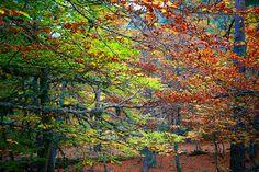El otoño ha invadido los bosques de Soria.