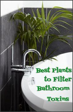 best plants to filter bathroom toxins
