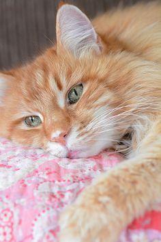Milhaus Cat
