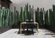 Cacti provide privacy at El Montero in Mexico