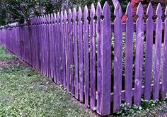 The purple fence. my poor neighbors would just have to shake their heads!! lol