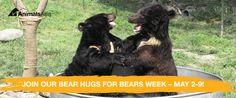 The world needs a bear hug – please help! - rommyh6@gmail.com - Gmail We Bear, Pet Day, Hug, Bears, Animals, Animales, Animaux, Bear, Animais