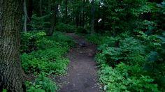#Ingramwoods #statenislandparks #statenisland #parks