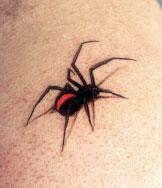 So real! Black Widow Tattoo, Spider Tattoo, Tattoo Studio, Tattoos, Spiders, Memories, Insects, Tatuajes, Archangel Tattoo
