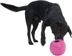 Best Dog Toys, Dog Chew Toys, Best Dogs, Fruit Dogs Can Eat, Cube Image, Frozen Toys, Canned Dog Food, Summer Dog, Mini Schnauzer