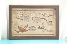 Flowers of Middle Earth // Botanical Chart // by AwkwardAffections